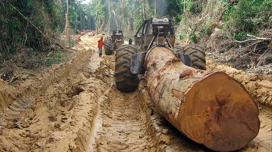 Blood Timber: A Resource Curse